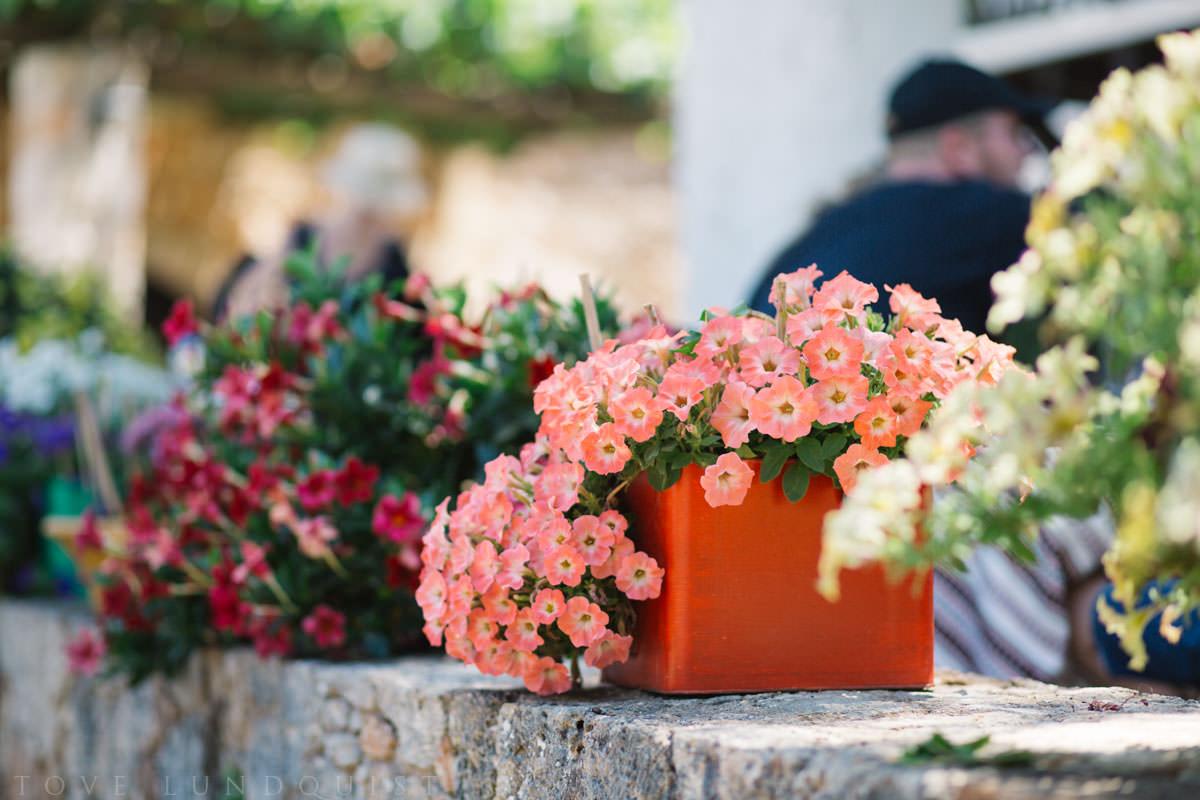 Färgglada blommor på Manousakis Winery, Chania - Kreta. Foto: Tove Lundquist, bröllopsfotograf Malmö.