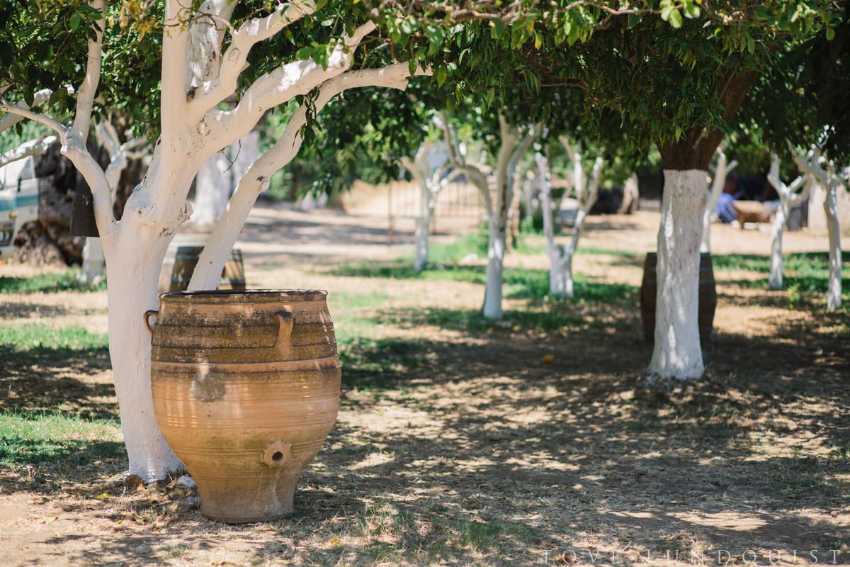 Trädgården på Manousakis Winery, Chania - Kreta. Foto: Tove Lundquist, fotograf Malmö.