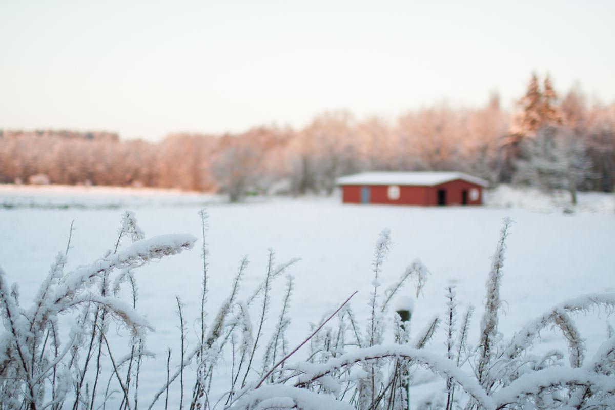 Snö och stall i bakgrunden, fotograferat på Österlen utanför Tomelilla. Foto: Tove Lundquist.