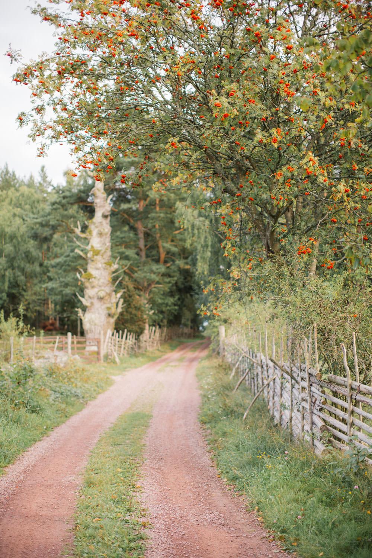 Liten grusväg vid Lövö, Småland i augusti.